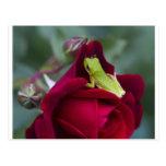 Ranas arbóreas verdes y rosas rojos postal