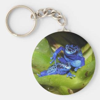 Ranas azules del dardo del veneno en la hoja 1 llavero redondo tipo pin