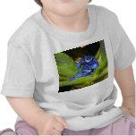 Ranas azules del dardo del veneno en la hoja 1 camisetas