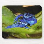 Ranas azules del dardo del veneno en la hoja 1 alfombrillas de ratones