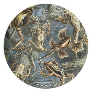 Ranas de Haeckel Platos