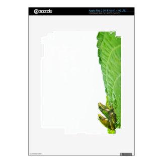 Ranas verdes en la licencia iPad 3 pegatinas skins