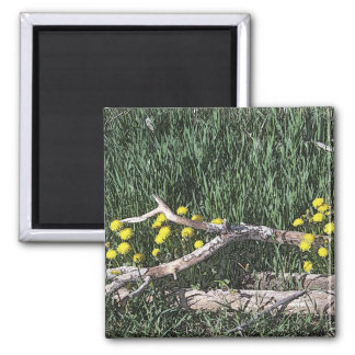 Ranch Beauty 2 Inch Square Magnet