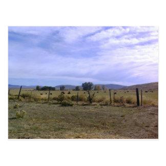 Ranch Life Postcard