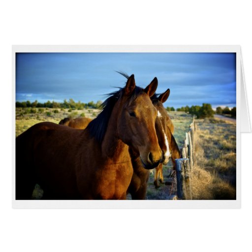 Ranch Youngsters Greeting Card
