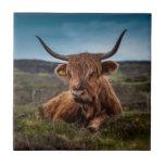 Ranchero escocés de Bull del fonolocalizador de bo Azulejos Ceramicos