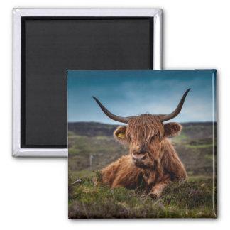 Ranchero escocés de Bull del fonolocalizador de bo Iman De Frigorífico