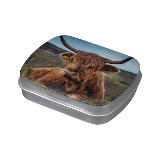 Ranchero escocés de Bull del fonolocalizador de bo Latas De Dulces