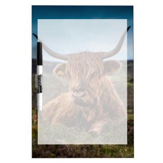 Ranchero escocés de Bull del fonolocalizador de bo Pizarras Blancas