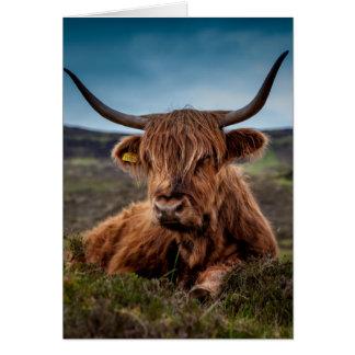 Ranchero escocés de Bull del fonolocalizador de bo Felicitacion