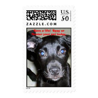 Random 032_edited, Save a life!  Spay or Neuter... Postage