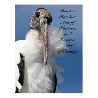 Random Acts of Kindness Postcard - Wood Stork