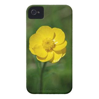 Ranúnculo amarillo iPhone 4 protectores