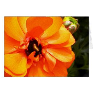 Ranúnculo anaranjado con el centro negro felicitacion