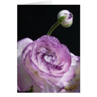 Ranúnculo persa blanco del asiaticus del ranúnculo felicitacion
