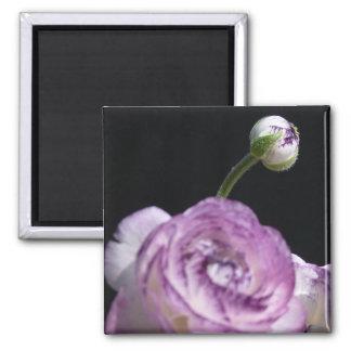 Ranunculus asiaticus White Persian buttercup II 2 Inch Square Magnet