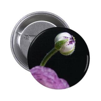 Ranunculus asiaticus White Persian buttercup II Buttons