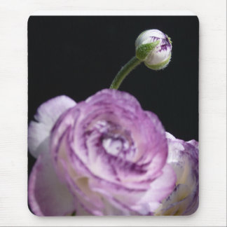 Ranunculus asiaticus White Persian buttercup II Mouse Pad