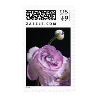 "Ranunculus asiaticus, ""White Persian buttercup II"" Stamp"