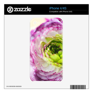 Ranunculus Bloom Decal For iPhone 4