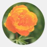 Ranunculus Round Stickers