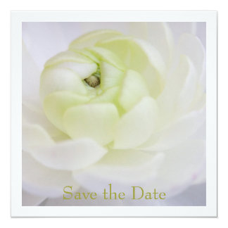 Ranunculus Save the Date Announcement