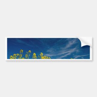 Rape field with blue sky bumper sticker