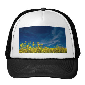 Rape field with blue sky trucker hat