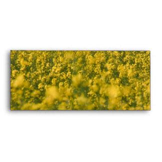 Rapeseed field envelope