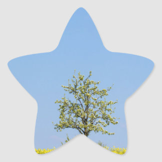 Rapeseed field with apple tree and blue sky star sticker