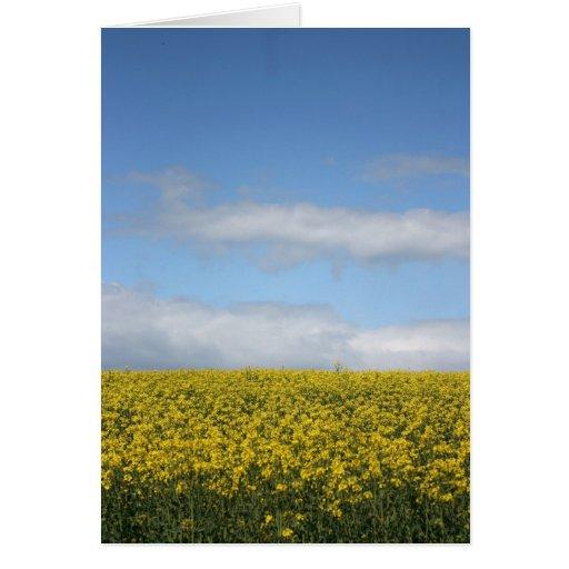 Rapeseed flowers in Somerset field, UK Greeting Card