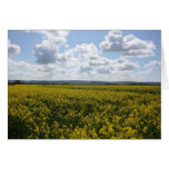 Rapeseed flowers in Somerset field, UK Cards