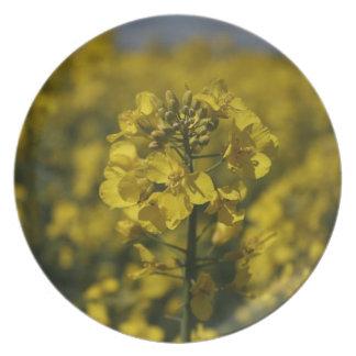 Rapeseed flowers in Somerset field, UK Dinner Plate