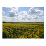 Rapeseed flowers in Somerset field, UK Postcards