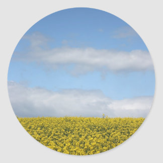 Rapeseed flowers in Somerset field, UK Classic Round Sticker