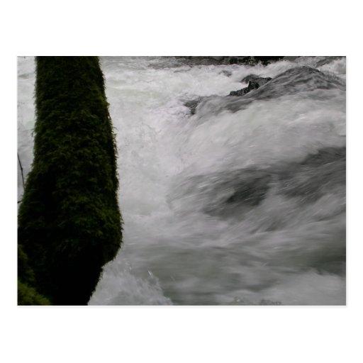 Rapids en el río del rugido postal