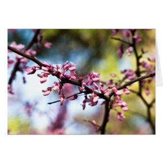 Rapsodia de la primavera