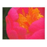 Rapsodia floral en rojo y amarillo tarjeta postal