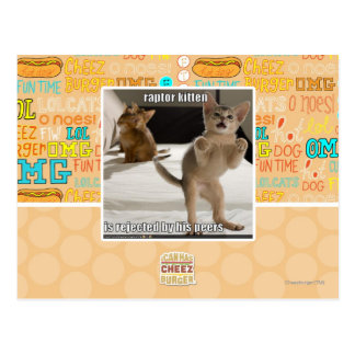 Raptor Kitten Postcard