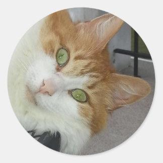 Raquel el gatito del rescate pegatinas
