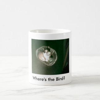 ¿Raqueta donde está el pájaro? gatito Taza