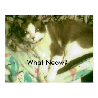¿raqueta qué Neow? gatito que pone en la manta Postales