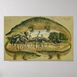 Rare 1905 Florida Alligator print