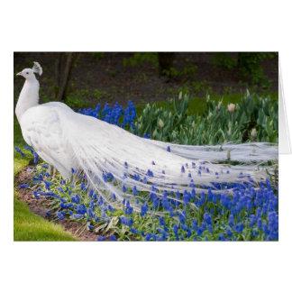 Rare Albino Peacock Design Greeting Card