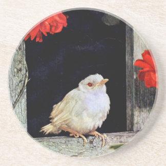 RARE albino robin bird Drink Coasters
