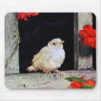 RARE albino robin bird Mouse Pad