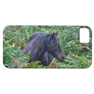Rare Black New Forest Pony - Wild Horse - England iPhone 5 Covers
