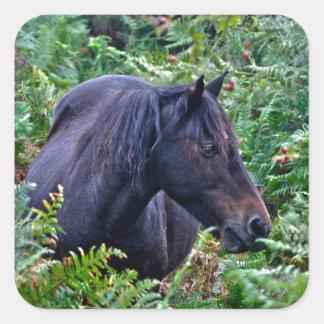 Rare Black New Forest Pony - Wild Horse - England Square Sticker
