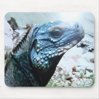 Rare,  Blue-Iguana endangered speces. Mouse Pad