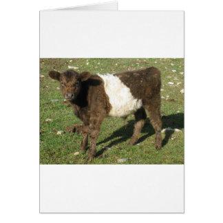 Rare Dun Belted Galloway Calf Card
